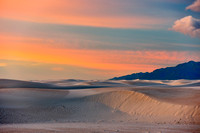 Morning Glory in White Sands
